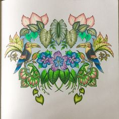 Johanna Basford Colouring Gallery Colored Pencil