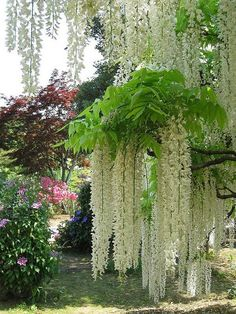 Ashikaga Flower Park ~ Tochigi, Japan ok youre killing me