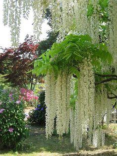 Ashikaga Flower Park in Tochigi Prefecture, Japan (by bmnhut).