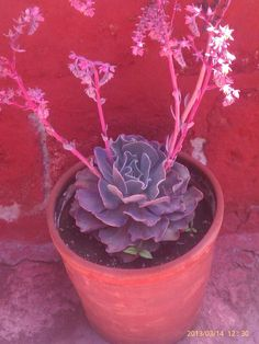 Plants and Flowers.   Arequipa, Peru.