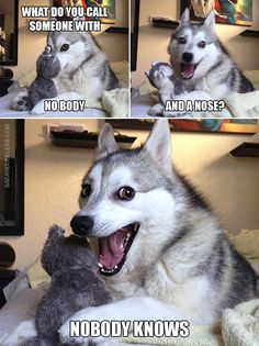 The Best Collection Of Husky Puns - Jokes - Funny memes - - The Best Collection Of Husky Puns The post The Best Collection Of Husky Puns appeared first on Gag Dad. Funny Shit, Funny Animal Jokes, Dog Quotes Funny, Really Funny Memes, Funny Puns, Stupid Funny Memes, Cute Funny Animals, Funny Relatable Memes, Funny Animal Pictures