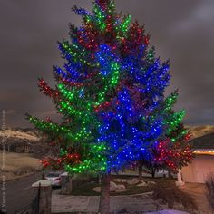 Light Wrapped Trees for Christmas! How to Wrap Outdoor Christmas Trees with Lights.