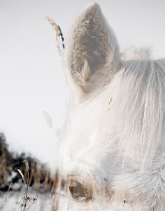 Cheval // horse |Pinned from PinTo for iPad|