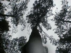 Somos árvores de um fruto só.  Marcelo Soriano