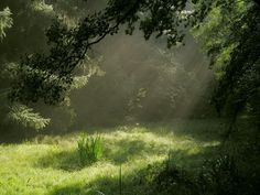 Envers du Decor - Meadow in the Forest by ~AvaBloom Nature Aesthetic, Faeries, Aesthetic Pictures, Mother Nature, Countryside, Beautiful Places, Peaceful Places, Beautiful Women, Green