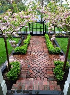 In my imaginary front yard. Front Entry Landscaping, Front Yard Walkway, Front Path, Courtyard Landscaping, Fenced In Front Yard, Front Yard Tree Ideas, Front Yard Fence Ideas Curb Appeal, Front Yard Hedges, Front Garden Ideas Driveway