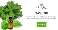 Basil oil is a strong antiseptic used for inhalation, baths, and massages. It is used to massage the skin. Commonly basil is preferred with tomatoes. Its use includes in the form of additives such as in flavoring salads, stuffing, sauces and omelets.l