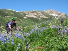 Mountain Biking Hip High Lupine in Crested Butte | Single track trails in Colorado's Official Wildflower Capital | Photo by: Gunnison-Crested Butte Tourism Association