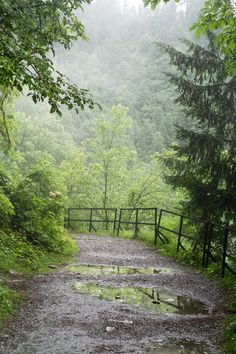 Ayubia National Park ( After rain)   par aliffc3