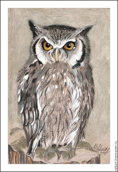 Brown Spotted Owl Colored Pencil Drawing