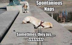99 best narcoleptic humor