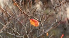 nature # 19 - Limited Edition of 1 Photograph Color Photography, Nature Photography, Photo Colour, Buy Art, Paper Art, Photo Art, Saatchi Art, Original Art, Fine Art