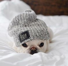 Where is this mini beanie?? I need it in my life!!