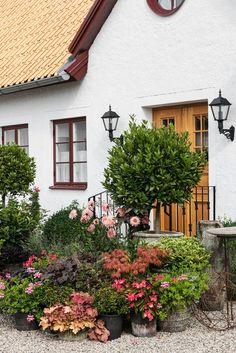 Hemma hos Karolina Brising och Anders Hörnell i Dalby Succulent Hanging Planter, Flower Planters, Hanging Planters, Geraniums, Garden Pots, Garden Trees, Container Gardening, Indoor Gardening, Garden Inspiration