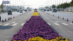 Longest carpet of flowers laid in China | Guinness World Records