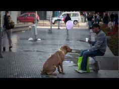ESTOY AQUÍ Intervención Urbana / I AM HERE Urban Intervention [ORIGINAL] - YouTube The original version of this video was made by two college students from Chile that surely did not have the resources to rescue or spay/neuter one dog, let alone all the dogs in this video. Posted to Desert Hearts on  - 8/31/2013 DESERT HEARTS Animal Compassion https://www.facebook.com/desertheartsphoenix