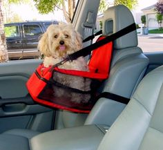 Dog Car Seat -- I feel like that would make it more likely for them to get thrown through a window...