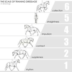 "Dressage Training Pyramid--not universal, depends on which ""school""."