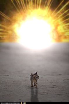 Cool kittehs don't look at explosions.