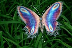 Butterflies come in so many brilliant colors; even fluorescent!