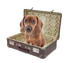 Kutyabarát szállást keresel? Gyere a Pincelakatba! #kutyabarátszállás #kutyámnélkülsoha