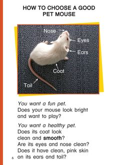 """A page from """"Pet Mice,"""" a book for children to learn some fun facts about pet mice to support the traditional tale """"The Lion and the Mouse."""""""