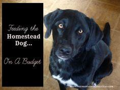 Homemade Dog Food: Feeding The Homestead Dog