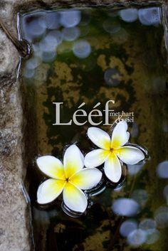 Fotograaf - Hanneri DeWet Hart, Afrikaans, Blossoms, Flower Power, Reflection, Art Projects, Flora, Wallpaper, Garden