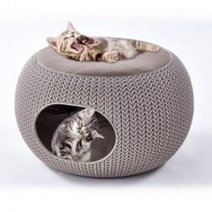 Cama Cozy Home Curver para Gatos Animal Gato, Dog Furniture, Cute House, Pet Chickens, Animal Crackers, Cat Sleeping, Cozy Bed, Pretty Cats, Pet Beds