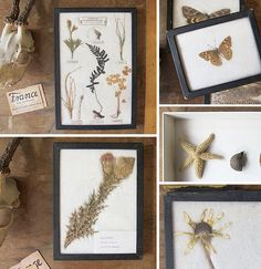 I have always been interested in framing specimens. these are featured on design sponge.