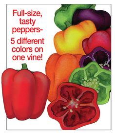 Rainbow Bell Pepper Plants
