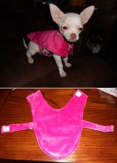 Top 10 Cute DIY Pet Clothes- My chihuahua is bald, so he will love these. He has been wearing a Richard Simmons style shirt that he loves. I am going to have to treat it with caution.