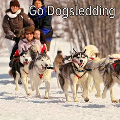 Bucket list: head to the snow and go dogsledding!
