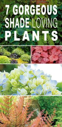 7 Gorgeous Shade Loving Plants is part of Outdoor garden Plants - The secret to a shade garden is easy simply choose the right plants! Here are TGG's picks for 7 gorgeous shade loving plants that any gardener can grow! Plants That Love Shade, Shade Garden Plants, Shaded Garden, House Plants, Partial Shade Flowers, Flowering Shade Plants, Shade Loving Shrubs, Shade Shrubs, Outdoor Plants