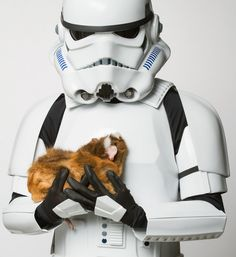 Even Stormtroopers can't resist piggies