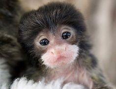 Resultado de imagem para filhote de macaco