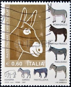 ITALY - CIRCA 2007: A stamp printed in Italy shows different breeds of donkeys, circa 2007