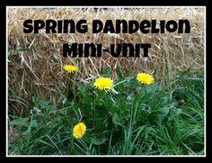 Dandelion mini-unit for pre-k/k. Art, science, recipes, and nature study.