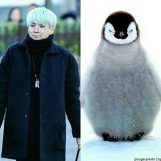 funny bts pictures and memes Enjoy! Please VOTE! Read Part 8 from the story Bts Funny by Soojungie_bangtan (melione) with 892 reads. Bts Suga, Min Yoongi Bts, Foto Bts, Bts Photo, Suga Funny, Bts Memes Hilarious, Funny Games, Seokjin, Hoseok