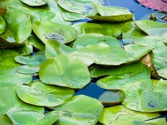 Lily Pads - free download on MMT