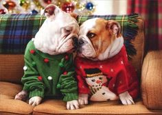 Christmas Bulldogs in Sweaters - Avanti Holiday Card