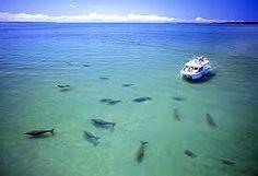 moreton bay region wildlife - Google Search
