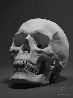 Skull Artwork, Skull Painting, Skull Drawings, Skull Reference, Art Reference Poses, Anatomy Sketches, Anatomy Art, Anatomy Study, Human Skull Anatomy