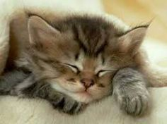 Risultati immagini per gatti teneri