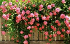 Gyönyötű hàttérkép tavaszra ;)