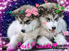 Blingee Puppies | two cute husky puppies tags cute husky puppies two