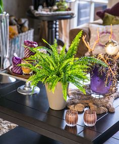 Image result for buy boston fern