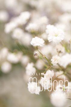 Dreamy white flowers - Fine Art Photography For Sale at www.colinmurdochstudio.smugmug.com
