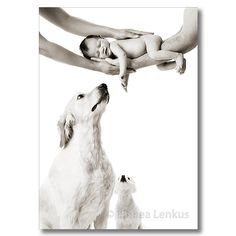 Newborn Baby Pictures, Babies and Dogs, Portrait Studios Creating Portraits of Family in Los Angeles
