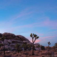 11 Amazing Things to Do in Joshua Tree National Park Congaree National Park, Sequoia National Park, Joshua Tree National Park, National Parks, Route 66 Road Trip, Road Trips, San Bernardino Mountains, Cecile, Best Hikes